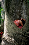 Girl Hidden in Tree
